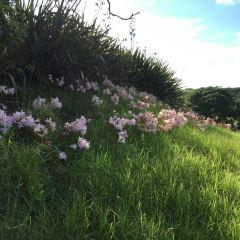 Kaitoke Regional Park User Photo