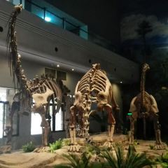 Zigong Dinosaur Museum User Photo