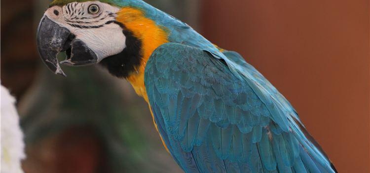 宿州野生動物園3