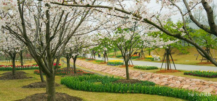 上海辰山植物園2