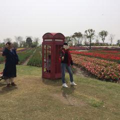 Zhoupu Sea of Flowers User Photo
