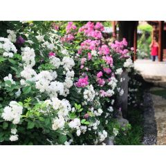 Xiulan Cultural Park User Photo