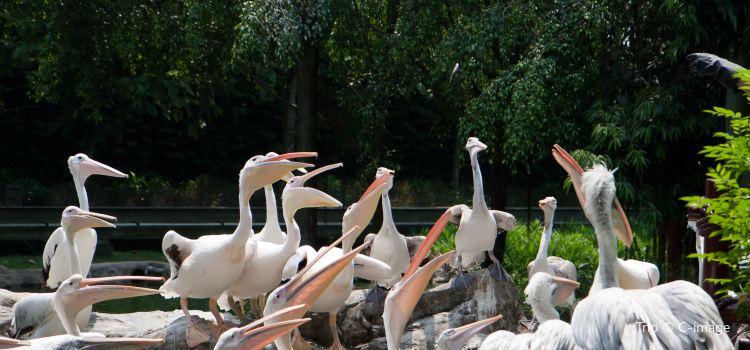 Jurong Bird Park1