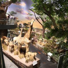 베이린 자연사 박물관 여행 사진