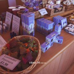 Yorkshire Lavender User Photo