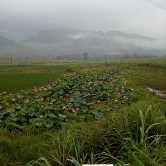 梵淨農莊用戶圖片