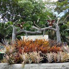 Island Safari User Photo
