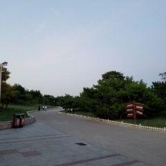 Tianjin Tanggu Forest Park User Photo