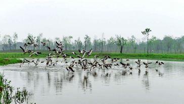 洋沙湖國家濕地公園