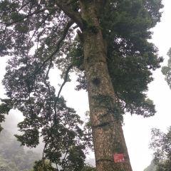Leiyin Temple User Photo