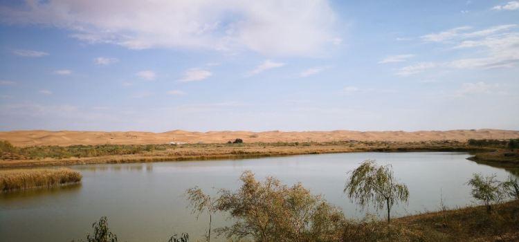 騰格里沙漠天鵝湖1