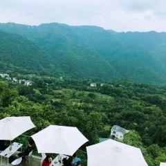 Nanshan Tree Viewing Platform User Photo