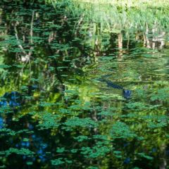 Manchac Swamp User Photo