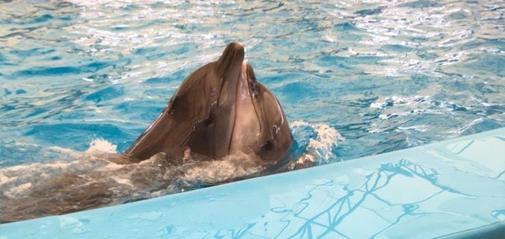 Dolphins Bay Phuket3