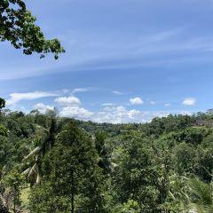 Bali Swing User Photo