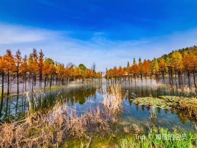 銀杏湖公園