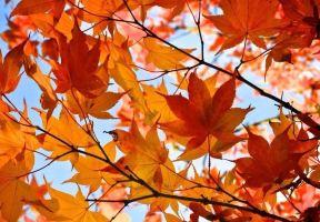 體驗春天裡的秋天,南寧唯一紅楓打卡地!