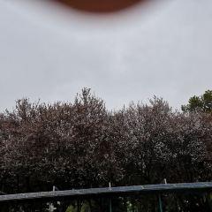 Shinei Hills Prospect Park User Photo