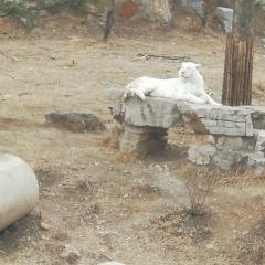Jinan Wild World User Photo