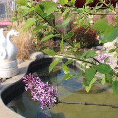 Taibaishan Yulongwan Hot Springs User Photo