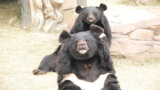 亞洲黑熊展區