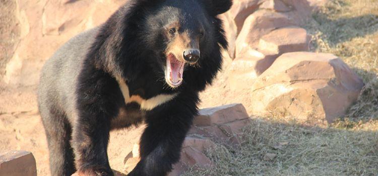 亞洲黑熊展區3