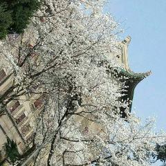 뤄자산 여행 사진
