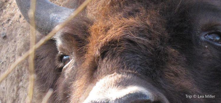 阿西尼博因公園動物園1