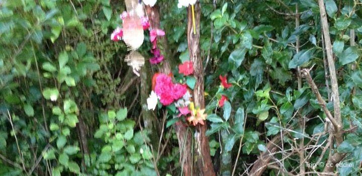 Karori Cemetery Tour1