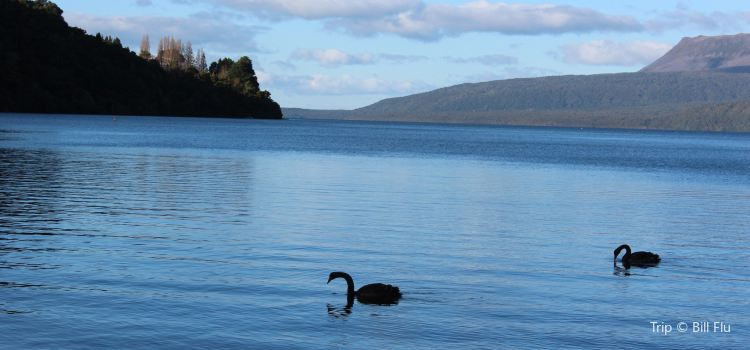 Rotorua Duck Tours2