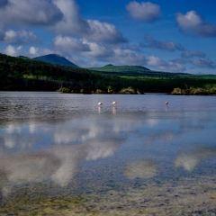 聖瑪利亞島用戶圖片
