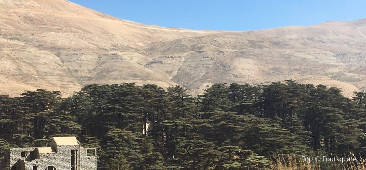 The Cedars of God3