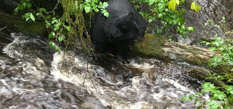 Alaska Rainforest Sanctuary2
