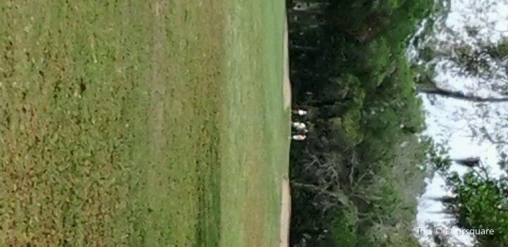 Tomoka Oaks Golf  Club1