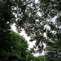 Patricia Ann Byrom Forest Preserve Park User Photo