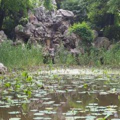弇山園用戶圖片