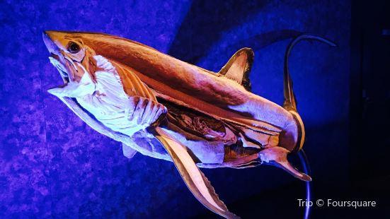 Sea Monsters Revealed