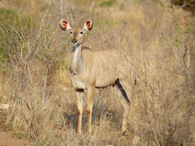 Thornbush Game Reserve