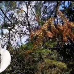 天子灣溫泉度假村用戶圖片