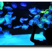 San Antonio Aquarium2