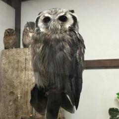 Kobe Animal Kingdom User Photo