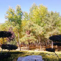 阿爾丁植物園用戶圖片