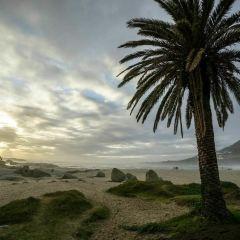 坎普斯海灘用戶圖片