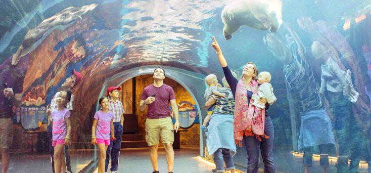 阿西尼博因公園動物園