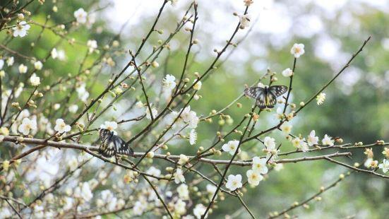 Plum Blossom Valley