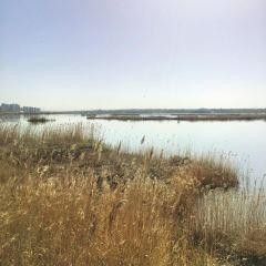 紅海子濕地公園用戶圖片