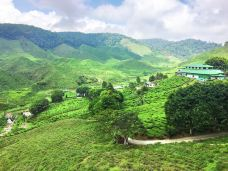 Tanah Rata Cameron Valley茶园-金马仑高原-尊敬的会员