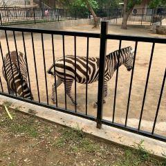 연태남산공원동물원 여행 사진