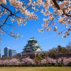 The Main Tower of Osaka Castle User Photo