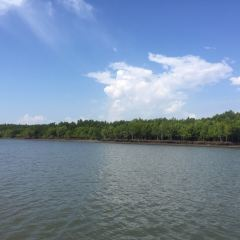 Thung Yee Pheng Mangrove Forest User Photo
